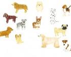 名古屋松波動物病院犬カット2014